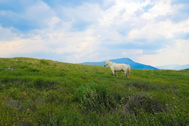 Лошадь на траве, луг в горах, горная долина в облаках
