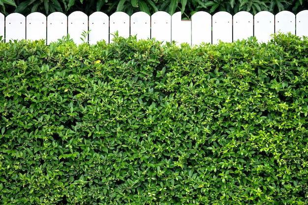 白い壁に背景の壁緑の抽象的な木