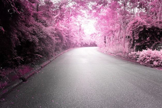 ピンクの美しい色合いの両側に木があるアスファルト道路。