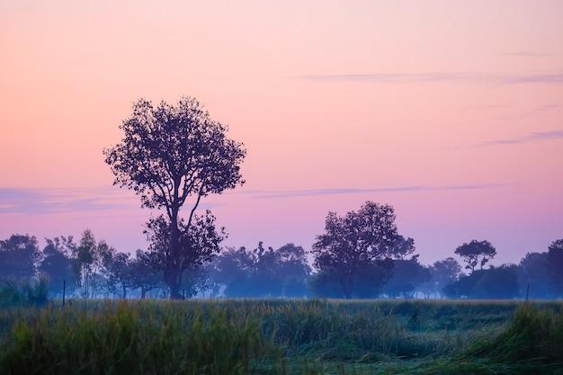 田んぼの風景は美しい朝日です。