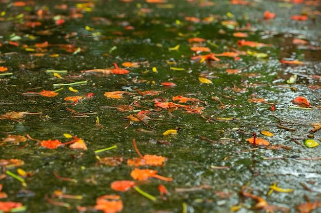 朝は濡れた床に花びらが落ちます。