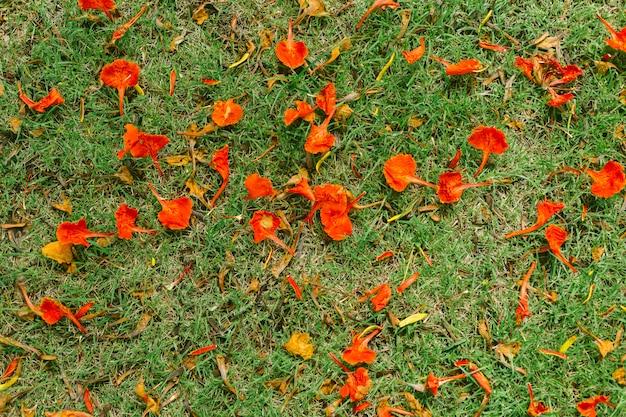 草の床に赤い花びら。