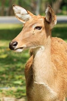 ガラス畑の農場で見られるように鹿