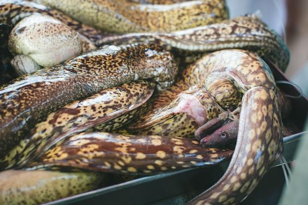 魚市場での生のモレイ