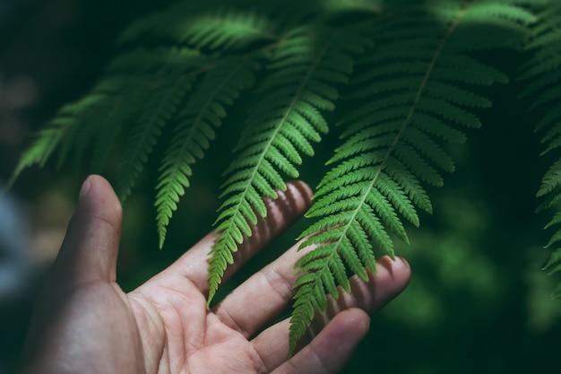 手、自然の概念とテクスチャの熱帯の緑の葉