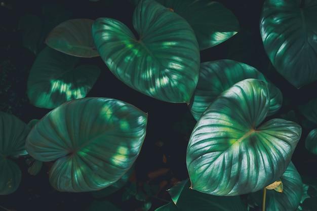 Тропические зеленые листья текстурированные и фон, концепция природы