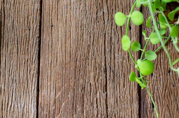古い木材の背景に緑の葉。