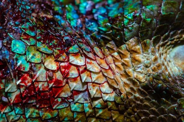 Закройте реальную кожу хамелеона, текстуру кожи травмы хамелеона для вашего дизайна.