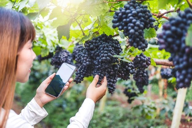 スマートフォンを使用してブドウ畑でブドウをチェックする農学者の女性ワインメーカー