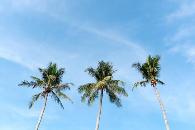 Концепция лета пляжа кокосовой пальмы
