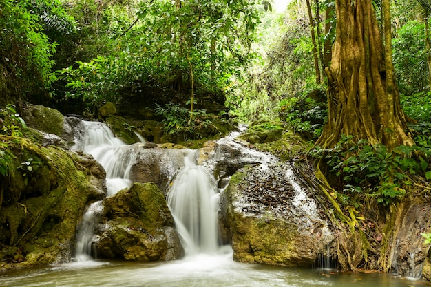 冒険は、大きな森の中で美しい滝を見つけます。