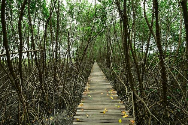 Маршрут к необъятному лесу.