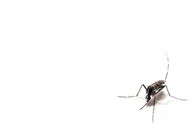 蚊をクローズアップ