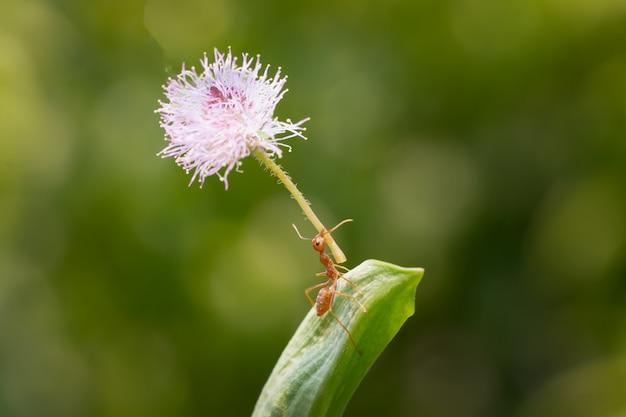 Действие муравья стоя. нести цветок или еду