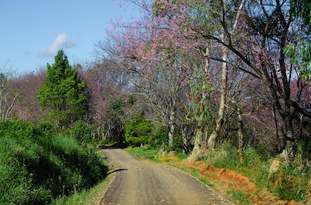森を渡る道