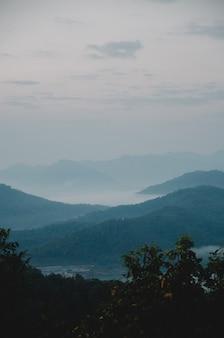 濃い緑の丘と木の前景と霧