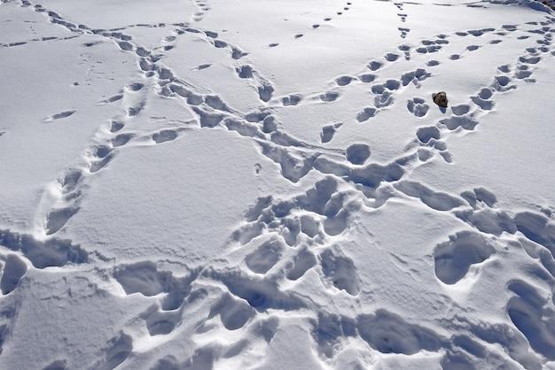 雪の上の足跡。インド、レー。