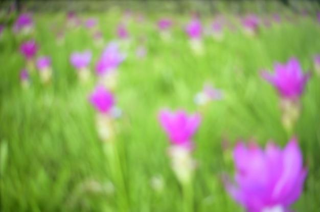 ツリーの背景を持つ自然の抽象的なぼやけた花畑。