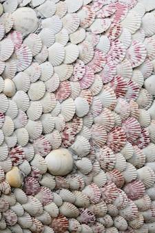 貝とハマグリのディテールテクスチャ背景のグループ