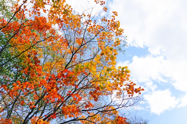 Осенний сезон в парке маруяма