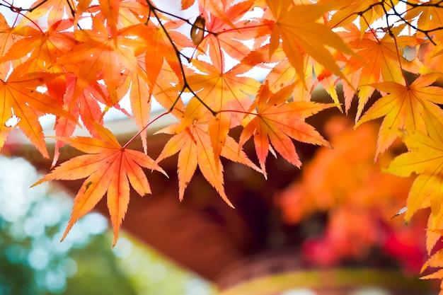 Осенний сезон деревьев и листьев в японии