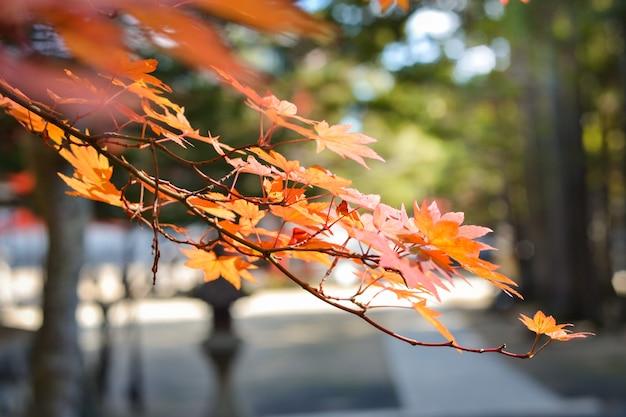Осенний сезон красочный из дерева и листьев