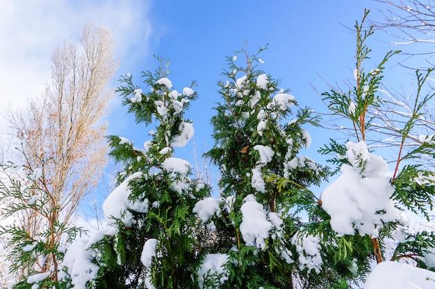 枝は雪だらけ