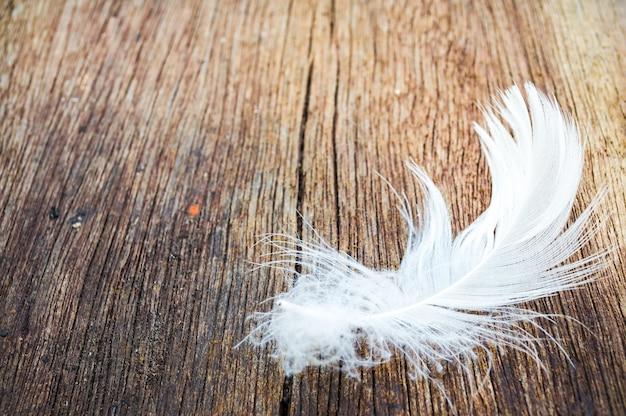 Белое перо на дереве