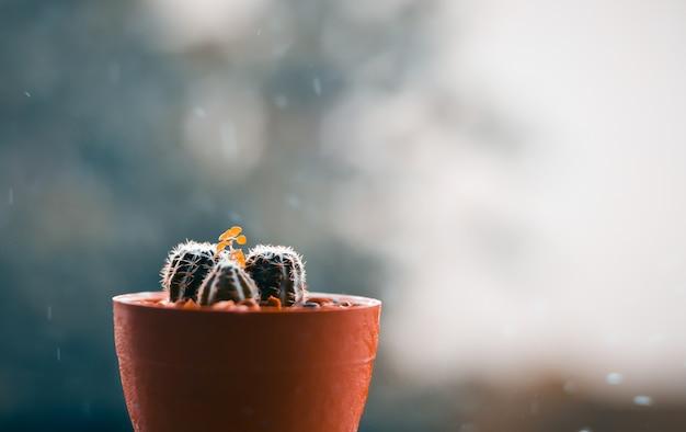 Кактус на террасе с размытым дождливым днем