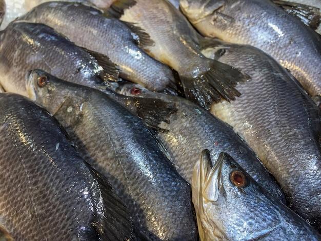 市場で屋台の氷の上で死んだ巨大なスズキ魚のクローズアップ。