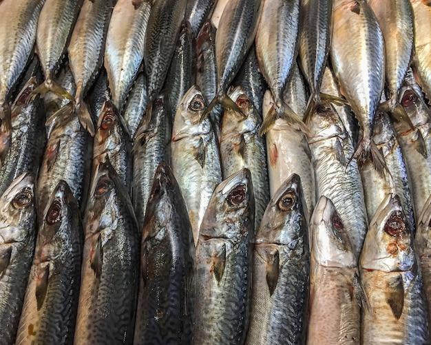 市場で屋台で氷の上の死んだサバの魚のクローズアップ。