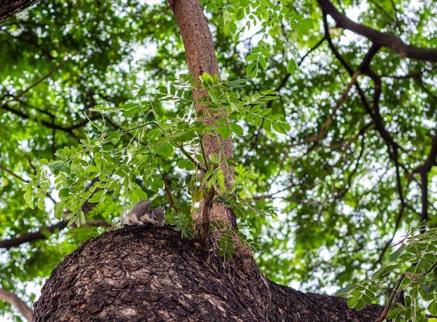緑の葉が付いている木の若いリス。ブランチツリーのシマリスのクローズアップ。
