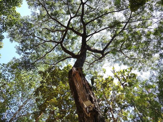残酷な環境に耐える木。