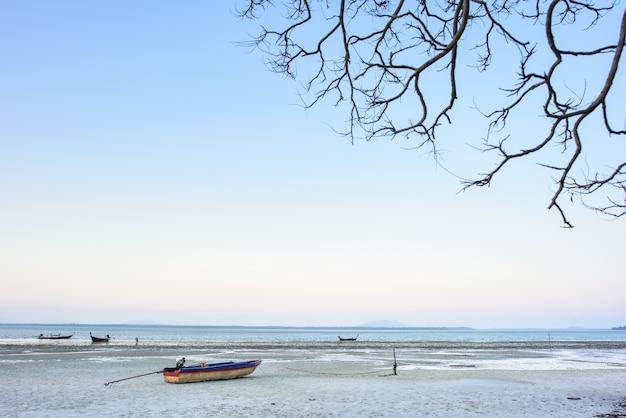 木の乾いた枝は南タイのビーチに属する