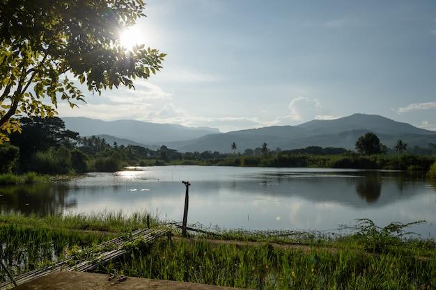水田。それはタイ、チェンマイ、ホッド地区の湖の近くのフィールドです。