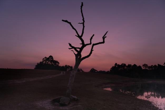 タイのカオヤイ国立公園の湖に沈む鮮やかな夕日。枯れ木のシルエットと空の色が水に反映されています。