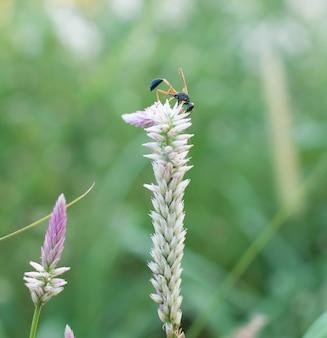 Крупный план насекомых собирает нектар на цветке с размытым зеленым фоном