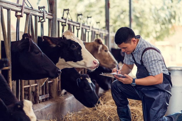 Фермеры записывают данные о каждой корее на ферме.