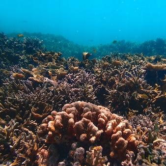 Красивые коралловые кораллы