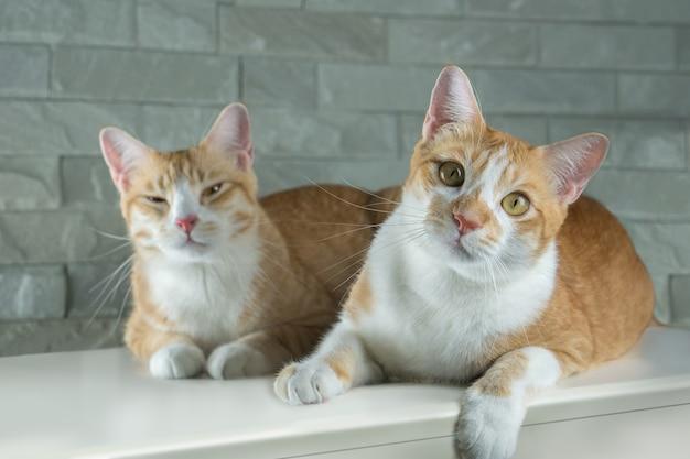 Оранжевая кошка выглядит очень мило.