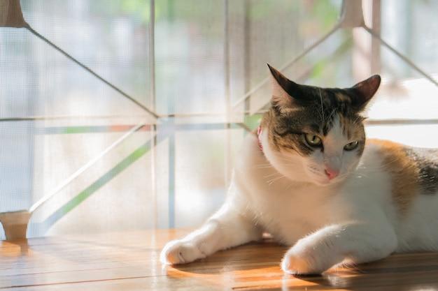 Кошки в таиланде