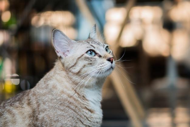 Милый серый кот смотрит вокруг