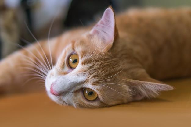 オレンジ色の猫は横になってこのように見ています。