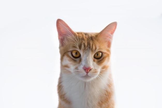 オレンジ色の猫はこのように見えます。