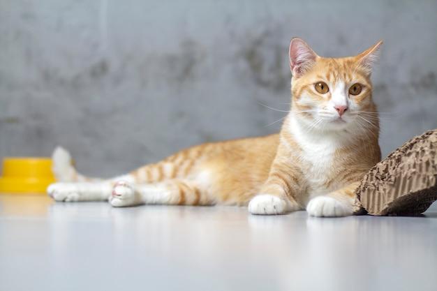 オレンジ色の猫が家に座っていました。