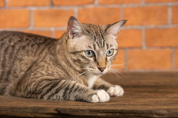 Так выглядят кошки очень мило.