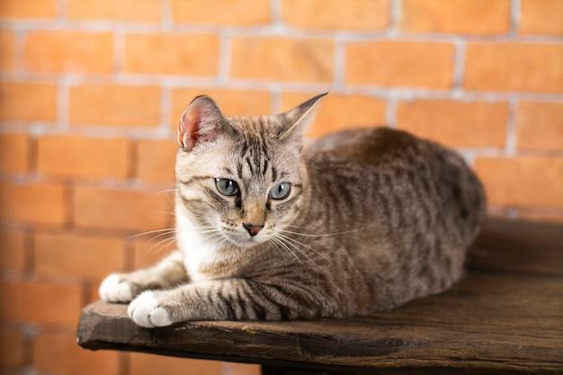 このように猫はとてもかわいいです。
