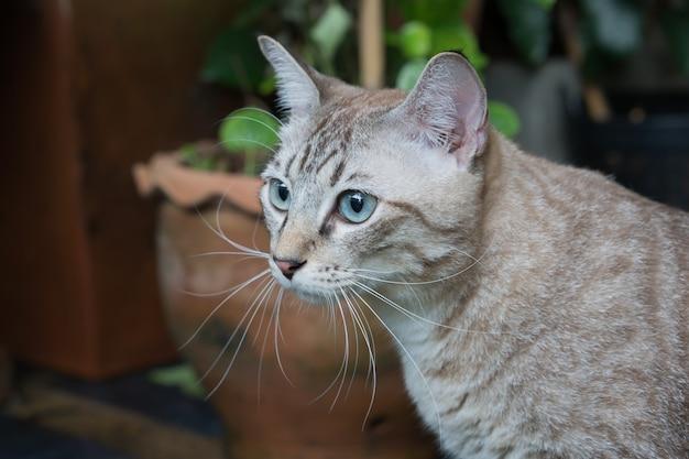 Красивая кошка на открытом воздухе
