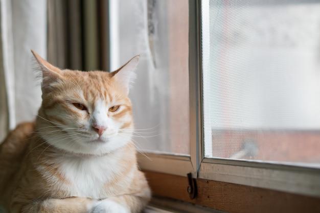 Оранжевый кот сидит у себя дома окно.