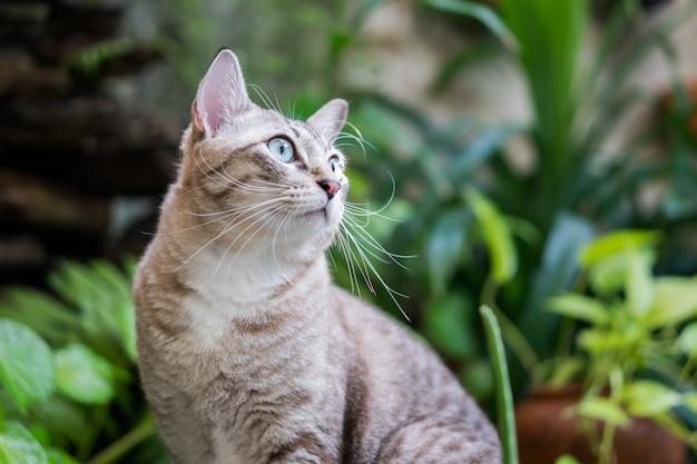 Красивая кошка в саду.